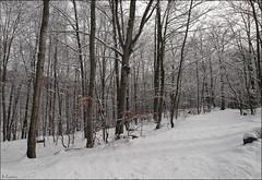 Blanco en la nieve (antoniocamero21) Tags: color rboles foto sony paisaje bosque invierno catalunya hayas montseny