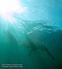 IMG_1555BS (forum.linvoyage.com) Tags: ocean sea thailand fishing underwater yacht outdoor diving freediving sail phuket spearfishing рыбалка море яхта рыба парус океан дайвинг тайланд таиланд фридайвинг тунец пхукет буй ружье подвох phuketian forumlinvoyagecom httpforumlinvoyagecom подводнаярыбалка phuketphotographernet