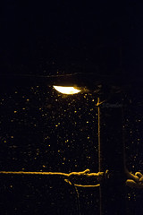 Snow is falling (J.Durdov) Tags: street winter light white snow cold fall night nikon cable calm falling d3300