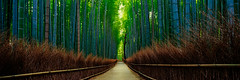 (Sunrider007) Tags: morning travel trees panorama plants reflection green wet water grass rain japan forest sunrise canon fence landscape kyoto grove path pano sony wide culture bamboo arashiyama vegetation tse 617 a7r absolutelystunningscapes