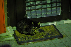 Today's Cat@2016-01-31 (masatsu) Tags: cat pentax cc100 catspotting mx1 thebiggestgroupwithonlycats