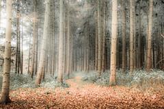 ***** (KJ Photographie) Tags: morning autumn trees tree leaves misty fog forest nebel laub wald bume morgen baum mystisch lightroom blumenundpflanzen nikond5000 benlagerbusch