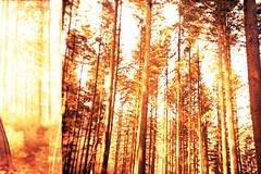 film (La fille renne) Tags: trees film nature analog forest 35mm landscape xpro lomography hiking doubleexposure hike lomolca multipleexposure crossprocessing fujifilm mx fujichromevelvia100 lafillerenne