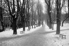loneliness (VladPL) Tags: park street leica trees winter blackandwhite bw snow blackwhite europe loneliness streetphotography ukraine lvov vlad leicacamera wintercity leicadigital leicaphoto winterlviv leicaphotos vladl leicaimages leicax2 leicaxseries lviv2016 leicajpeg vladpl vladplphoto vladplsphoto