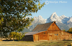 Repairing the Moulton Homestead-Mormon Row (moelynphotos) Tags: morning mountains tree barn repairing tetons grandtetonnationalpark moultonbarn moelynphotos