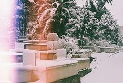 000009 (kirmizidemlik) Tags: winter snow cold green film grave graveyard analog 35mm vintage dead 50mm snowy istanbul retro explore 17 analogue tress analogphotography kar expiredfilm xg1 filmphotography minoltaxg1 analogcamera amlca undersnow filmisnotdead filmlmedi