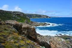 Kangaroo Island, Australia. (RViana) Tags: australien australie oceania     ozeanien  ocanie  oceanien   oseania beacheslandscapes
