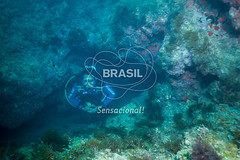 NE_Abrolhos0035 (Visit Brasil) Tags: horizontal brasil natureza mergulho bahia esporte nordeste aventura externa abrolhos semgente subaqutica diurna