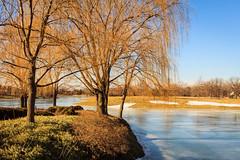 Sun on the Willows 48 of 365 (3) (bleedenm) Tags: winter usa ice illinois february cbg willowtrees 2016