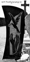 Libert (PhotOw'graphie) Tags: monochrome graveyard plaque gris main sombre libert croix colombe cimetire