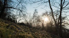 (Jan Durst) Tags: sunset tree sunrise 35mm woods focus dof bokeh sony 14 voigtlnder lightroom morgentau sharpness a7s pikay