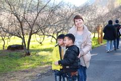 IMG_8292 (JIMI_lin) Tags: taiwan sakura  tw