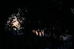 Entardecer... (quanaval_sp) Tags: sunset landscape sopaulo paisagem prdosol sampa ibirapuera
