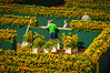Sunflowers labyrint (Emiel Dekker) Tags: netherlands amsterdam museumplein sony nederland sunflowers zonnebloemen vangoghmuseum a57 labyrint