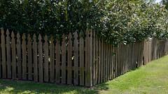 Down on the Corner (BKHagar *Kim*) Tags: wood green yard corner fence garden wooden al outdoor alabama decatur hff bkhagar fencefriday
