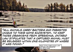 Quotation explaining why captured animals must be released with one kilometre of where they were captured. (Ken Whytock) Tags: ontario animals outdoors release captured parasites bacteria organisms