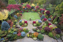 Tapestry of colour in our autumn upper garden (Four Seasons Garden) Tags: york uk flowers blue autumn red england colour green english leaves yellow stone garden four japanese maple seasons award foliage national begonia paving deciduous winning tapestry walsall 2015 yorkstone acers
