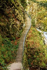 Stairs upwards (Michelle Christin) Tags: nature stairs outdoor stairway treppe weg pfad naur