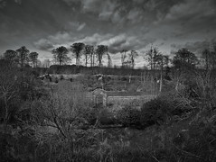 denbrae garden bw-4240069 (E.........'s Diary) Tags: trees white black st woodland garden mono andrews eddie walled denbrae rossolympusomdem5markiiscotlandapril2016spring