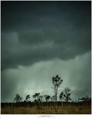 De open hemelsluizen (nandOOnline) Tags: nature landscape nederland natuur wolken nd gradient zon regen heide landschap haida lierop strabrechtseheide regenwolken neutraldensity grijsfilter nbrabant softgradient grijsverloopfilter