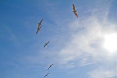 IMG_0908-1 (DaveHamburger) Tags: la losangeles manhattanbeach hermosa redondobeach culvercity palosverdes culverhotel