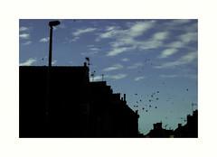 Les chers corbeaux dlicieux (hlne chantemerle) Tags: blue sky france noir faades bluesky bleu normandie soir extrieur vue nocturne paysages calvados oiseaux eure ciels ombres toits chemines btiments nuageux corbeaux antennes photosderue