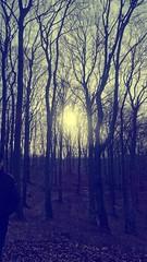 <3 (h9ooo-9) Tags: las trees forest puppy skinny dolina skinnypuppy drzewa radion wrzeszcz jakowa radi0n h9000 h9ooo chudyszczeniak