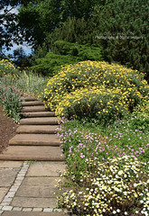 HERBACEOUS BORDER (David~Preston) Tags: uk flowers england cheshire path steps herbaceousborder nessbotanicgardens thewirral