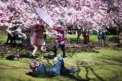 2016 (agnes.saabythomsen) Tags: pink spring forr lyserd kirsebrtrer bispebjergkirkegrd