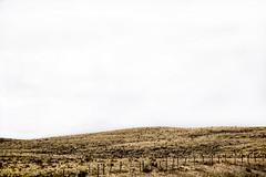 Rangelands (Mister Day) Tags: ranch canada open space empty dry alberta plains minimalist wasteland rangelands