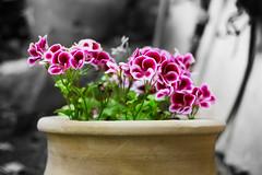 Spring (Lotan Sartel) Tags: flower spring flowerbud