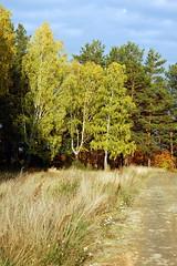 DSC_6058 (Rustam Bikbov) Tags: autumn september 2012    sverdlovskoblast