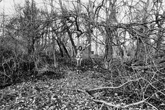 6 (kstetner) Tags: bridge portrait white black tree scarf self bed log woods shoes boots path branches silk camouflage fallen overexposure