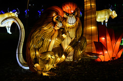 Monkey Lanterns (pokoroto) Tags: autumn canada calgary monkey october alberta lanterns 10 2015     kannazuki   themonthwhentherearenogods 27