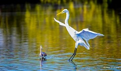 Near Miss (   (Thank you, my friends, Adam!) Tags: macro closeup lens nikon florida wildlife ngc central telephoto dslr