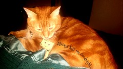 Always Kiss Me Goodnight (karmenbizet73) Tags: cats art cat toys photography flickr toystory random goodnight always kissme danbo amateurphotographer 8366 danboard photodevelopment danbolove toysunderthebed 2016366photos