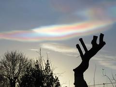 02Feb16 Nacreous Sky3 (Daisy Waring World) Tags: pink sky cloud silver motherofpearl nacreous torquoise treestumpsilhouette