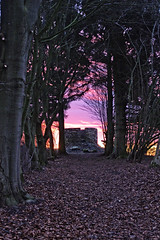 Am Morgen. (jens.steinbeisser) Tags: sunrise bume sonnenaufgang morgens morgenrot inthemorning aussichtsturm lightzone pentaxkr