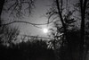 (GeraldDeschain) Tags: trees moon plant tree monochrome night forest canon dark landscape 50mm outdoor no edited branches flash ukraine gerald serene tangle darky chernivtsi 650d chernovtsy deschain canont4i
