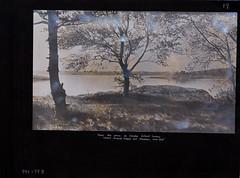 Harbor Island View (Old Derby) Tags: blackandwhite usa plant tree landscape island harbor massachusetts 1915 harborisland hingham hinghamharbor raggedisland howardhenderson langleyisland hinghamhistoricalsociety
