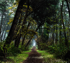 A forest of talking trees (matteosaragoni) Tags: trees winter sea italy plants cold fog pine forest shadows darkness hiking path land ravenna pinewood northitaly marinaromea
