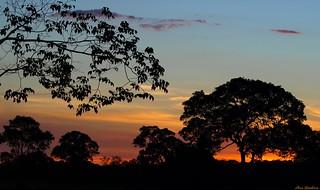 Pantanal sunset...