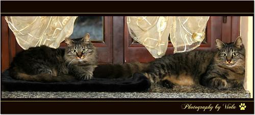 Happy lazy Caturday !