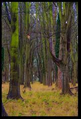 The Park (cofarrell25) Tags: park plant tree digital forest canon landscape eos rebel outdoor serene xsi