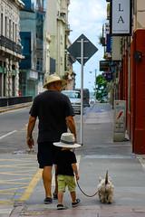 IMG_5837 (boyd1960) Tags: street dog hat walking uruguay hats montevideo