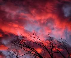 Sunrise (Michael Kline) Tags: trees clouds sunrise virginia january roanoke 2016