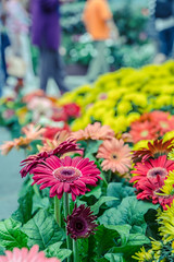 World of flowers (Shister ) Tags: flowers gardens by canon bay singapore bokeh cny 6d flowerdome