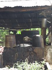 IMG_7947 (alexandre.vingtier) Tags: haiti cap rum nord rhum haitien clairin