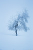 The Dancer (Stan Of Persia) Tags: trees winter snow nature beauty switzerland suisse hiver minimalism lasagne lessismore jourblanc treeinthesnow