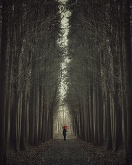 (reykcols) Tags: trees red tree nature forest umbrella woodland woods walk